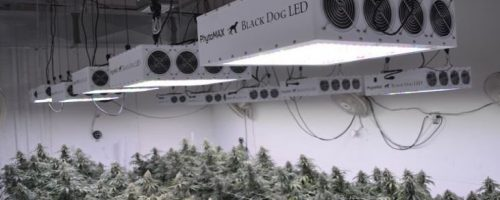 Best LED Grow Lights 2021