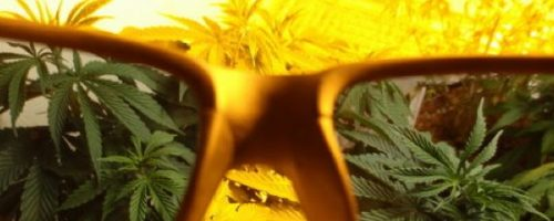 Best Grow Room UV Glasses