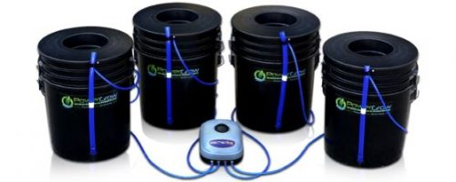 Best Hydroponic System for Growing Cannabis