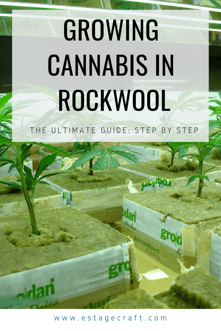 growing cannabis in rockwool